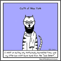 Cats Of New York
